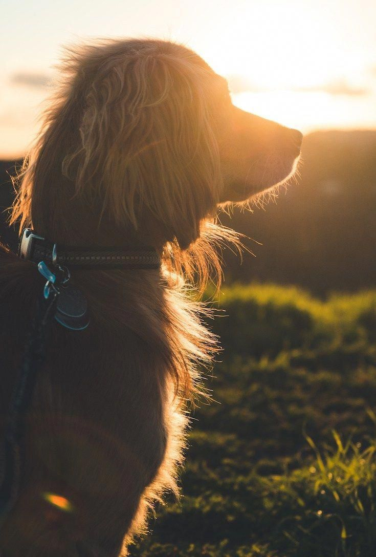 DOG PHOTOGRAPHY TIPS: 10 Quick Tips For The Best Dog Photos #dogsphotography