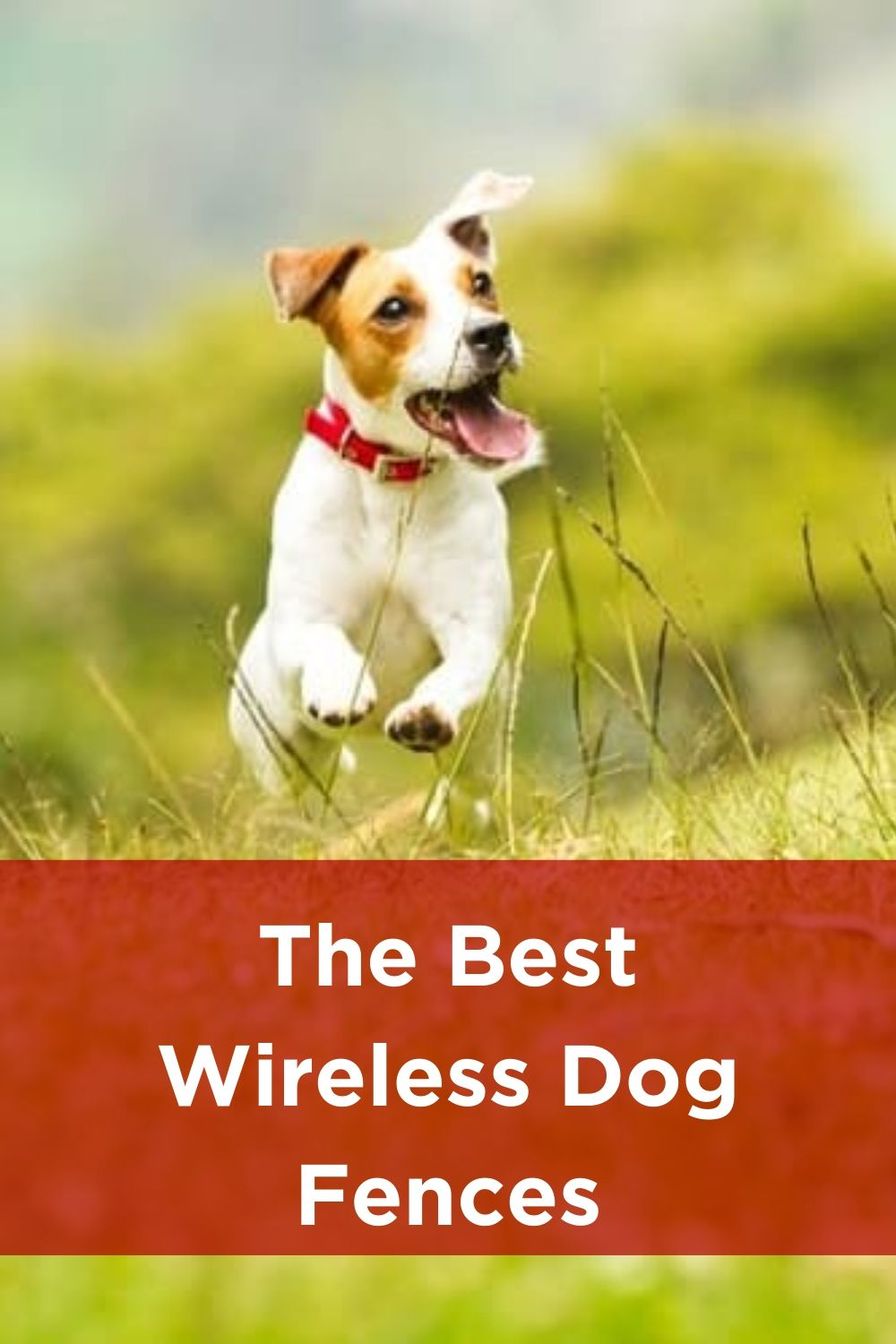 The Best Wireless Dog Fences 2020 Reviews If You Re In The Market For A Simple Solution To Your Canine Escape Artist Your In 2020 Wireless Dog Fence Dog Fence Dogs