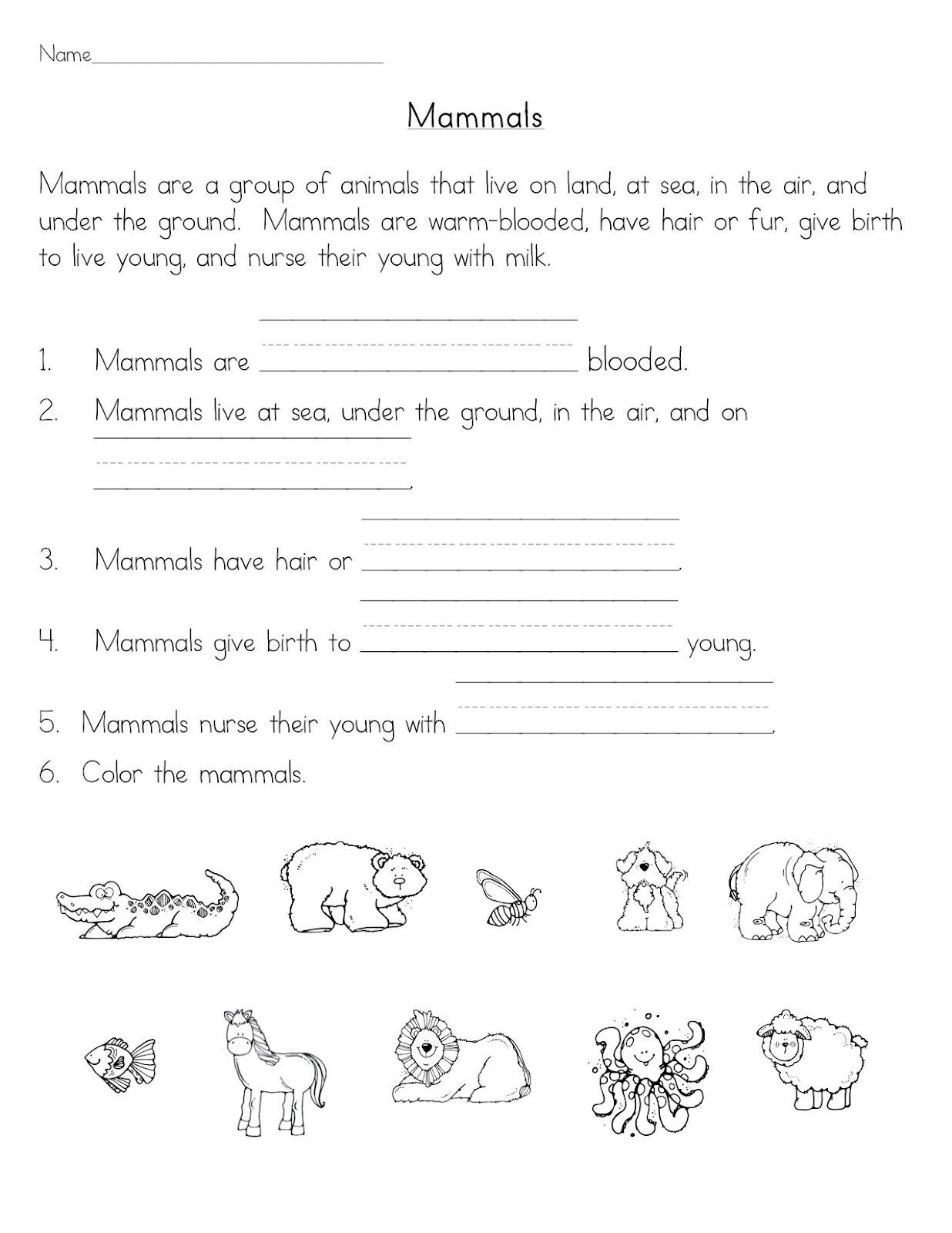 Mammals – Mammals Worksheet