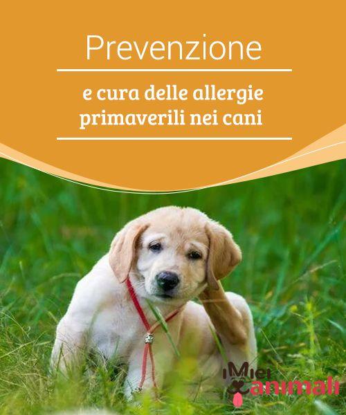 cancro alla prostata nei sintomi del cane