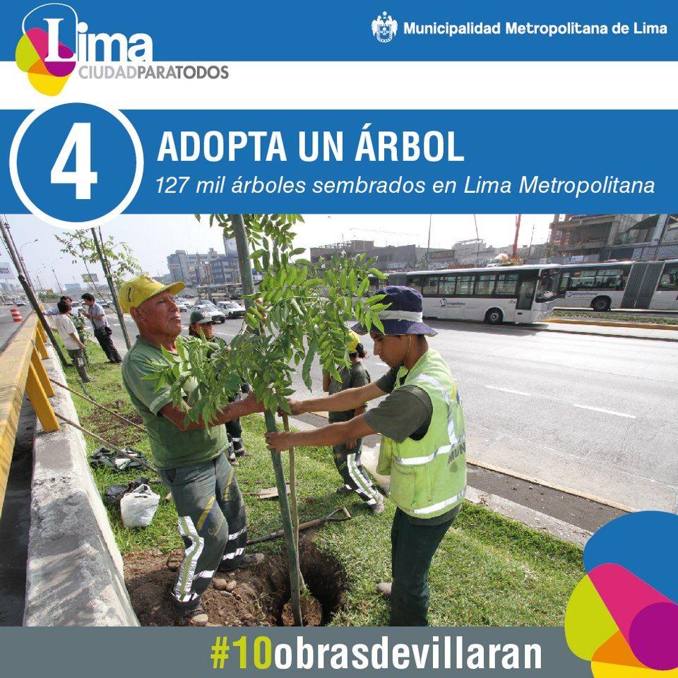 Plantamos 127 mil árboles junto a organizaciones sociales. ¡Adopta un árbol!