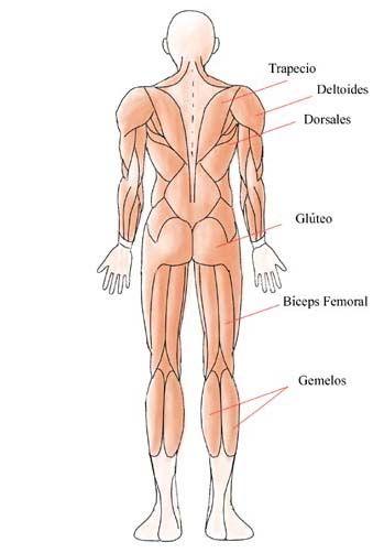 Dibujo Cuerpo Humano Para Dibujar Proporciones Del Cuerpo Humano Cuerpo Humano
