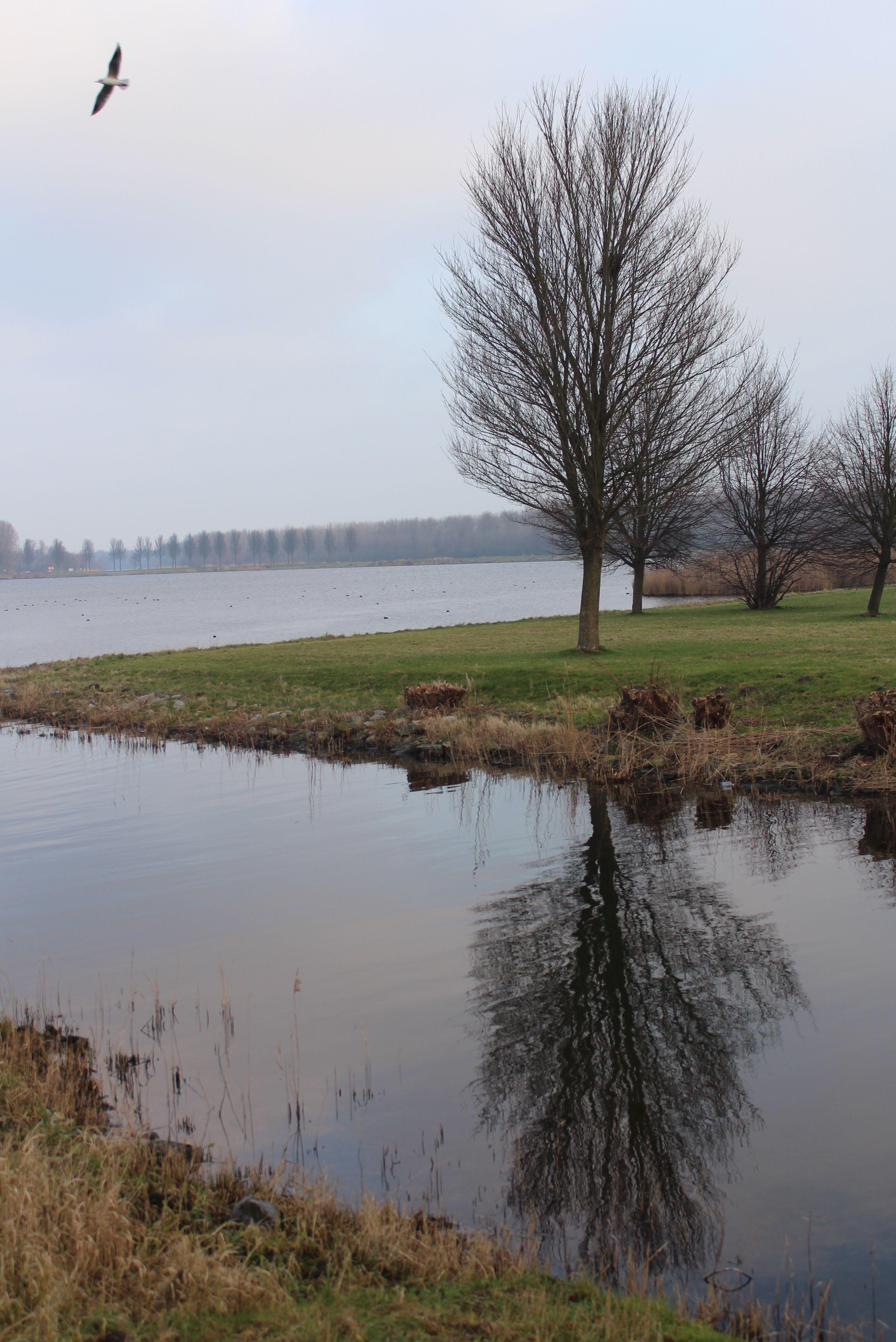 Maandag 5 januari 2015, Almere, De Boom, die in 2015 hoopt een BBer [Bekende Boom] te worden.