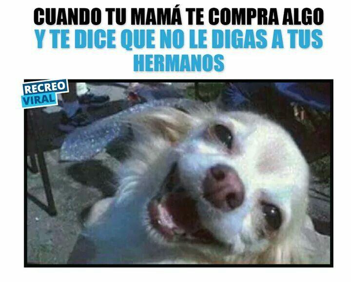 Pin De Adriana Ruiz En Memes Memes Divertidos Sobre Perros Memes De Animales Divertidos Memes Divertidos