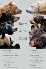 Andean Bear Conservation Project Bear Bear Pictures Malayan Sun Bear