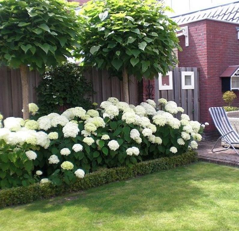Photo of Personvern etter hvitvoksende trær og hortensiaer