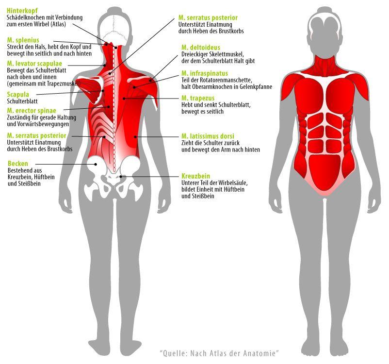 Die Anatomie der Rückenmuskulatur | BACK / NECK TROUBLE | Pinterest ...