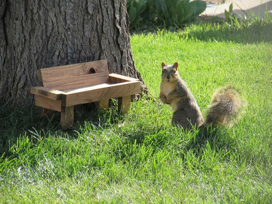 Standing Bird & Critter Feeder Park Bench Etsy in 2020