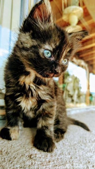 I firmly believe the best way to turn a great day into a purrfect one is to invest some time with criminally cute cats. #cat #cats #cats_of_world #catsoftheday #cats🐱 #cats_of_day #catsuit #catslover #catbreeds #ilovecats 🙃