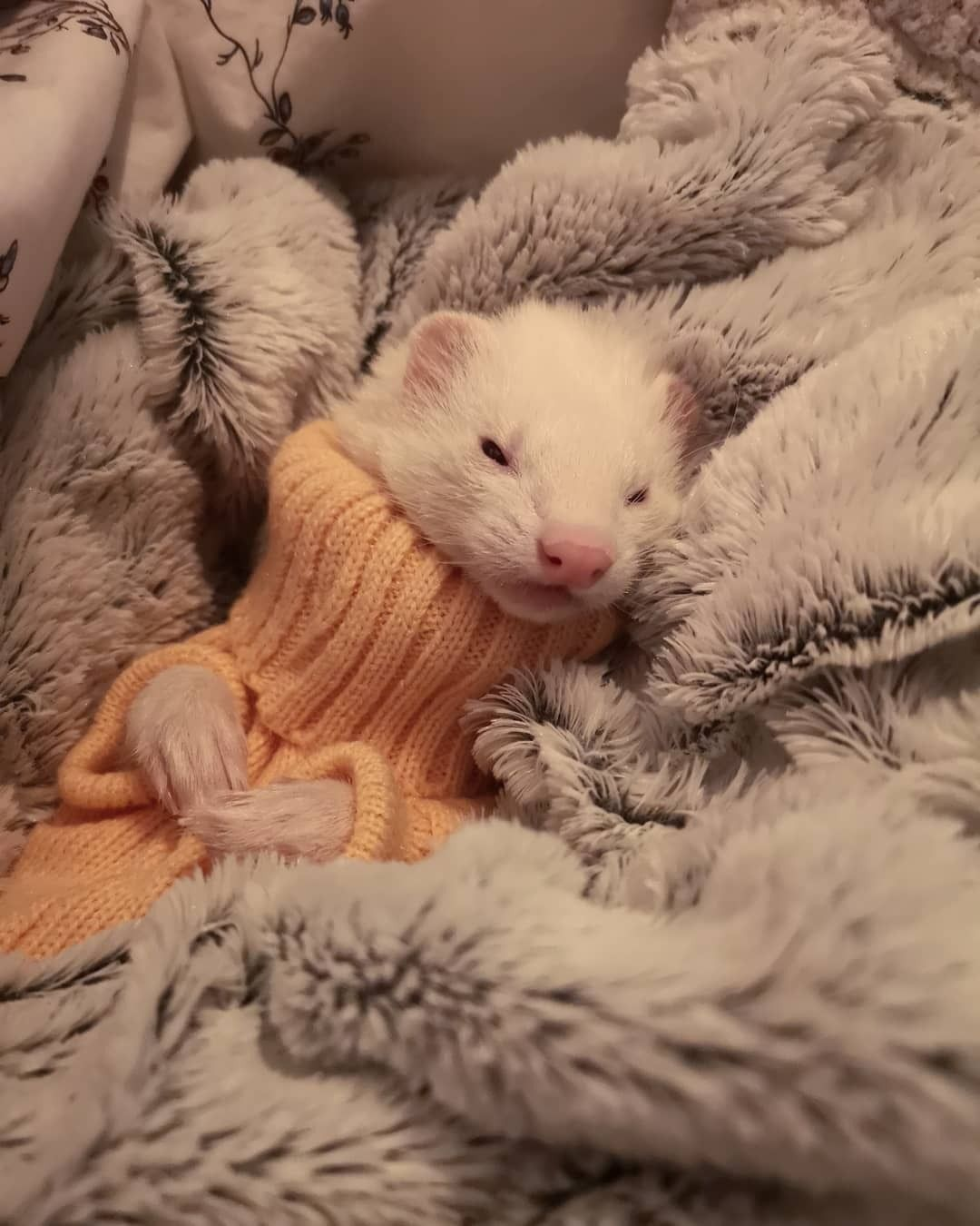 The Ferrets My Little Noodlebutt Turned 6 Years Old Today In