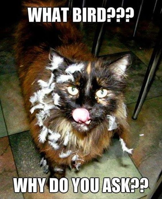 What Bird Funny Animal Pictures Funny Animals Silly Cats
