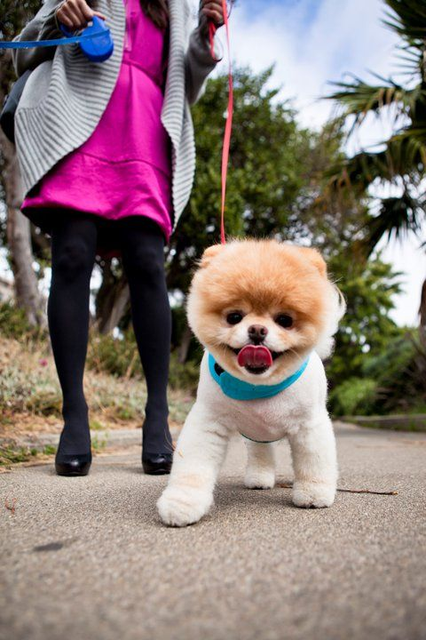 Obsessed With This Dog 動物 犬