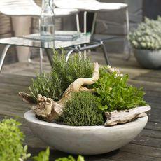 Leckere Balkongestaltung: Obst und Gemüse anbauen für den Naschbalkon #schönegärten
