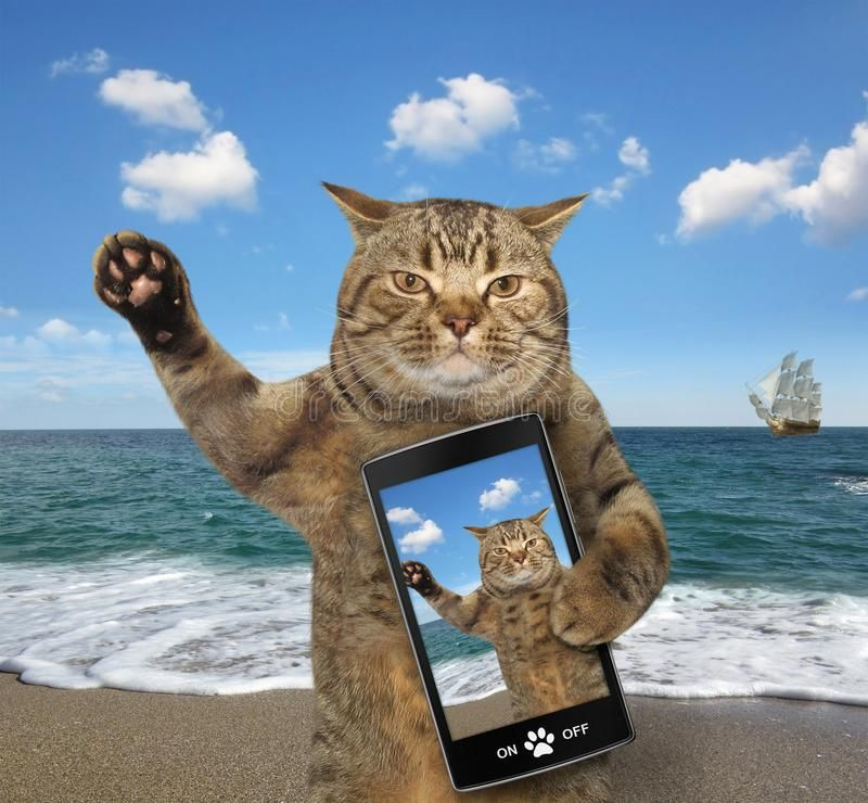 Cat with a cell phone. The cat with a cell phone is on a beach , #Sponsored, #cell, #Cat, #phone, #beach, #cat #ad | Cats, Cat artwork, Funny animals