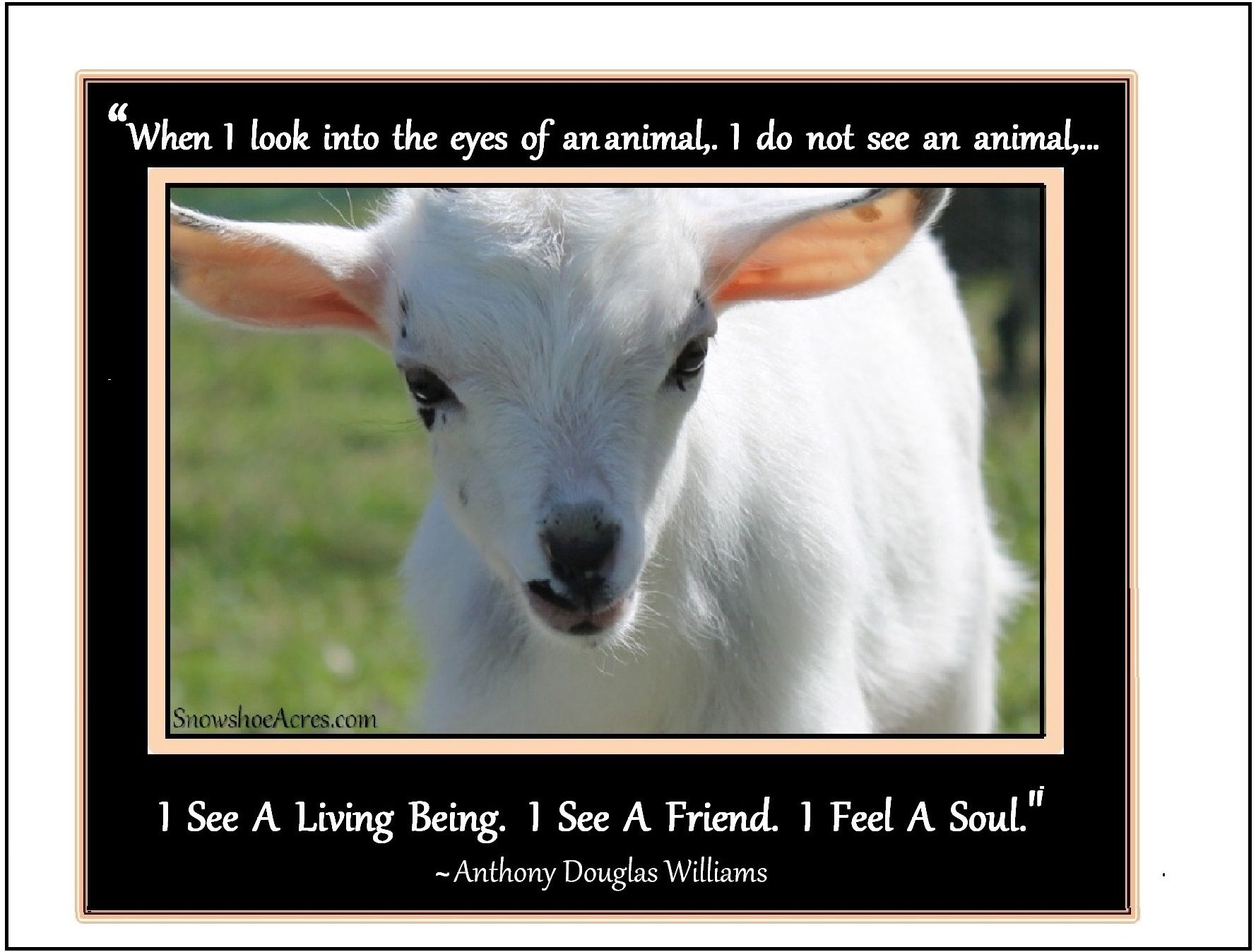 Kid Goat + quote. | Cute Colorful Comical Goats | Goats ...