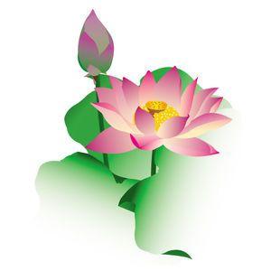 花 夏 ハス 蓮のイラスト素材画像集 スイレン Naver まとめ 夏の花 スイレン ハスの花