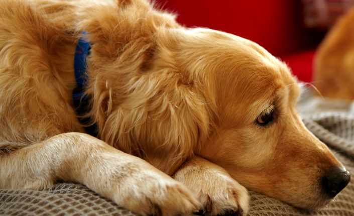 The Signs Of Poisoning In Dogs And Cats Can Vary Tremendously