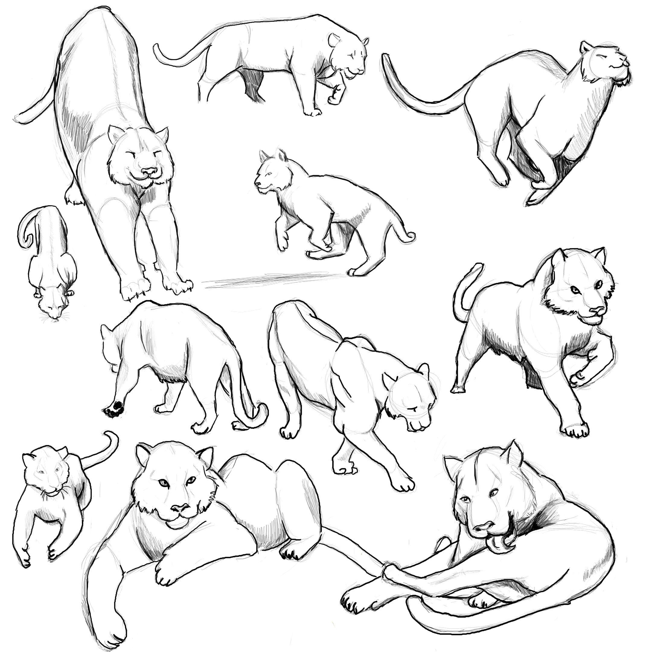 Картинки поз котов пол-спорта составляют