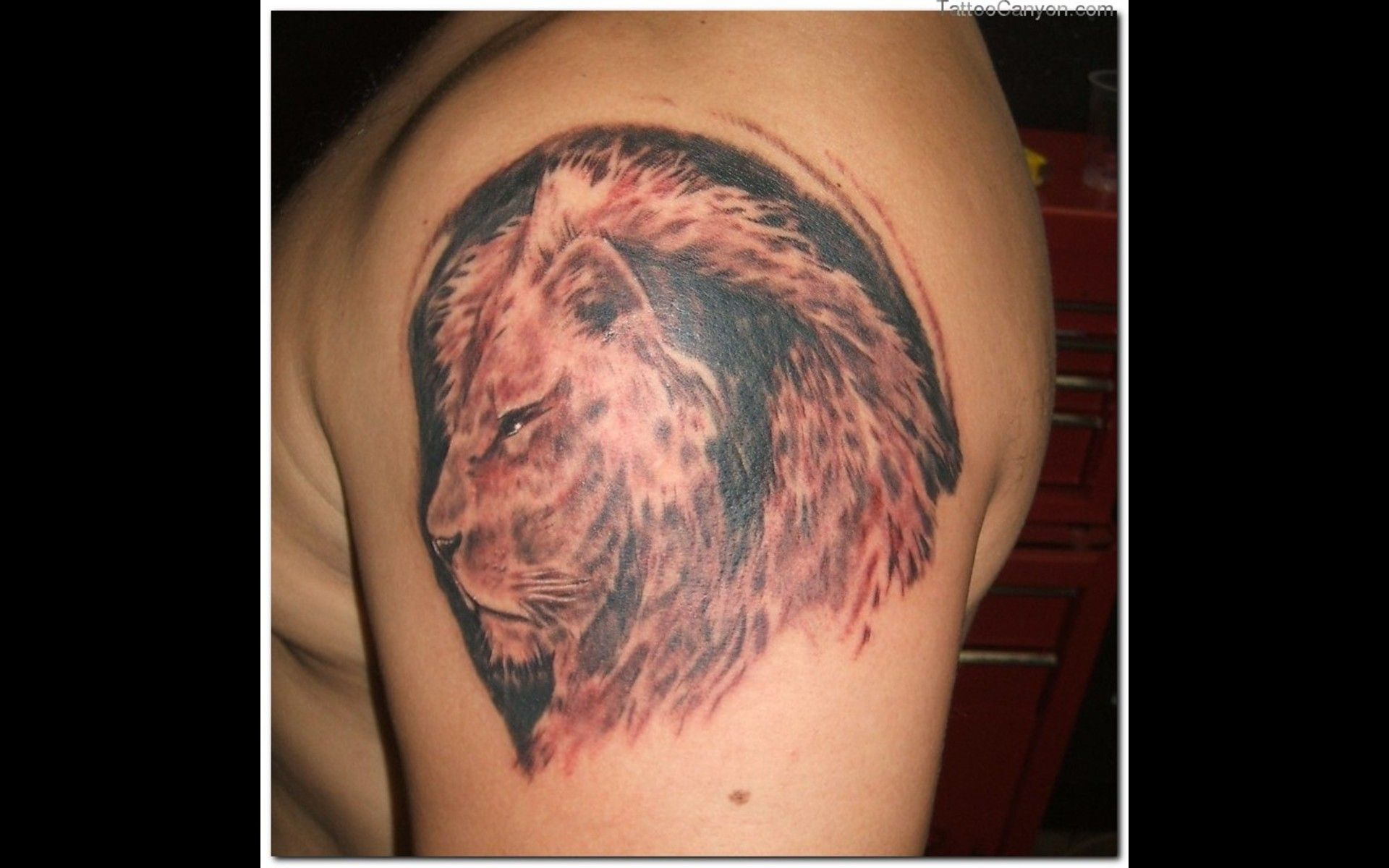 150 realistic lion tattoos and meanings 2017 collection - Realistic Horseshoe Tattoo Lion Tattoo Designs Pictures 7 Realistic