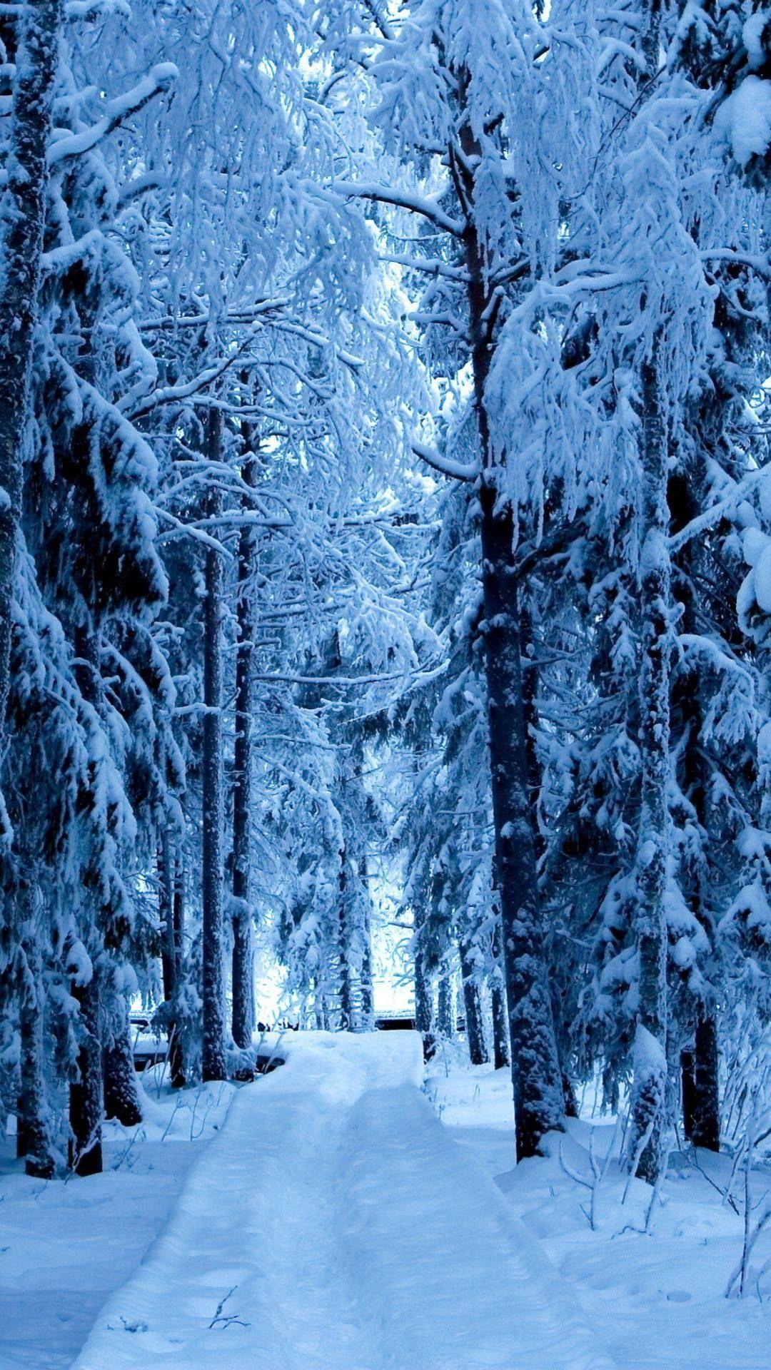 風景並木道雪 スマホ壁紙 iPhone7, スマホ壁紙/待受画像ギャラリー 冬の壁紙, 壁紙 android