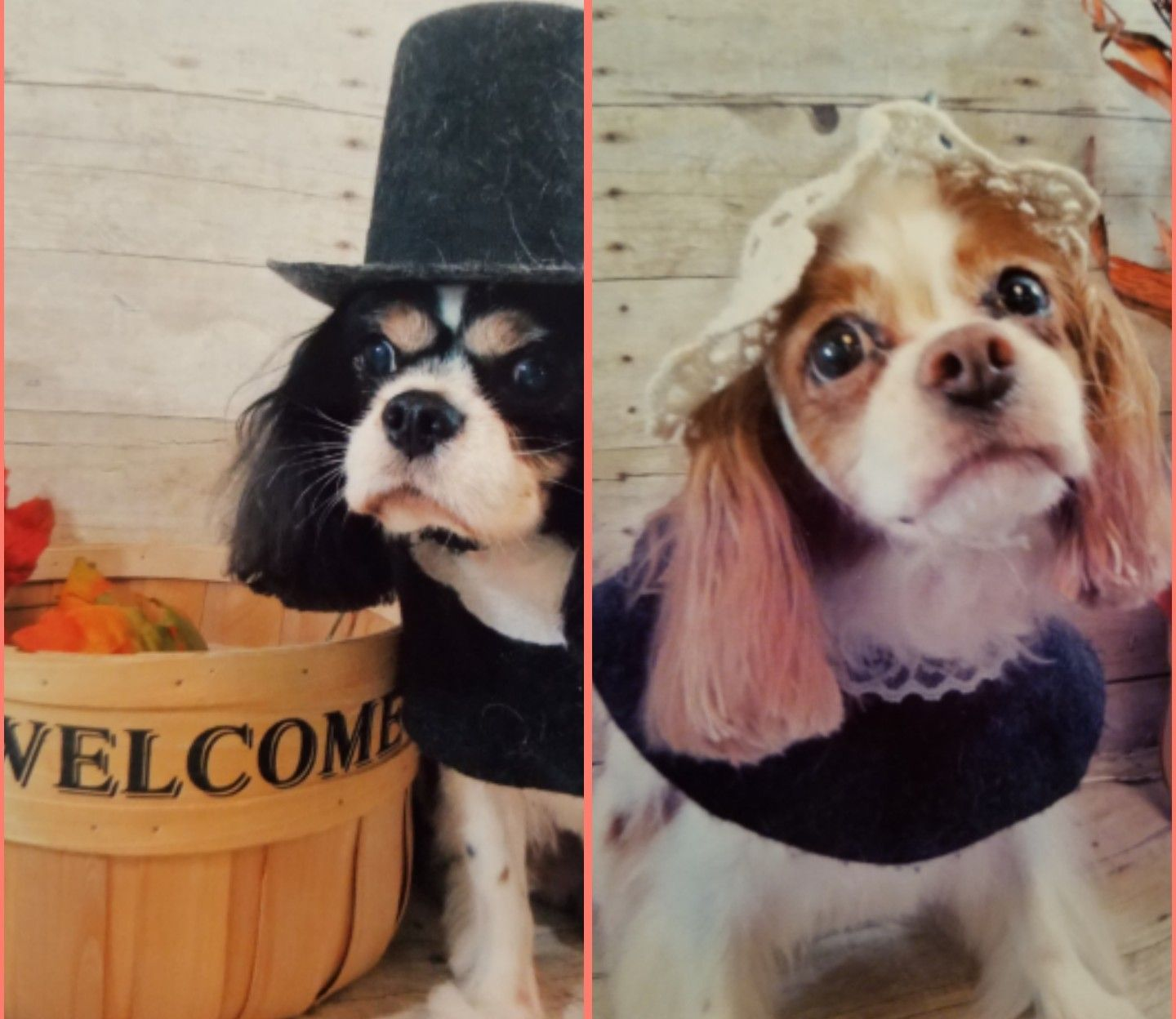 Pin By Manifesting Beauty On Cavalier King Charles Spaniels In 2020 Cavalier King Charles Spaniel King Charles Charles Spaniel