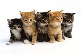 Cat 1: Is Cat 2: that Cat 3: a Cat 4: cook- Cat 5: ieeeee?!