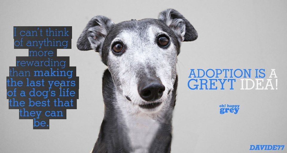 Rewarding A Greyt Idea 3 By Oh Happy Grey Facebook Senior