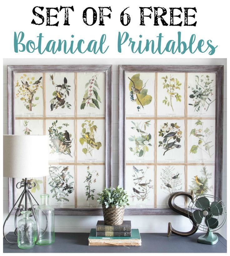 Window Picture Frame and Free Botanical Printables | Printables for