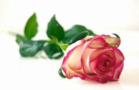 Th wedding anniversary gift list traditional modern flower