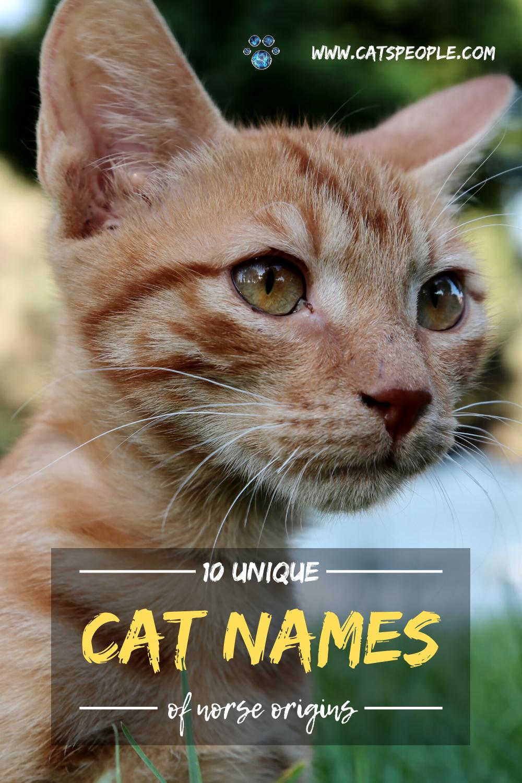10 Unique Cat Names of Norse Origins Male Edition in 2020