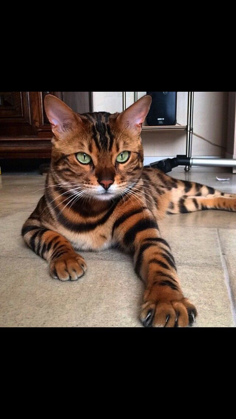 Pin by Himani ∫ on Cats Cats, Cute cats, Cute animals