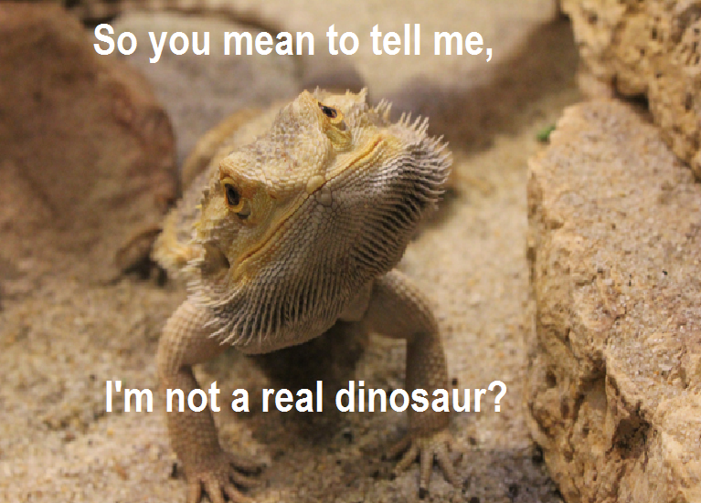 Funny Bearded Dragon Names