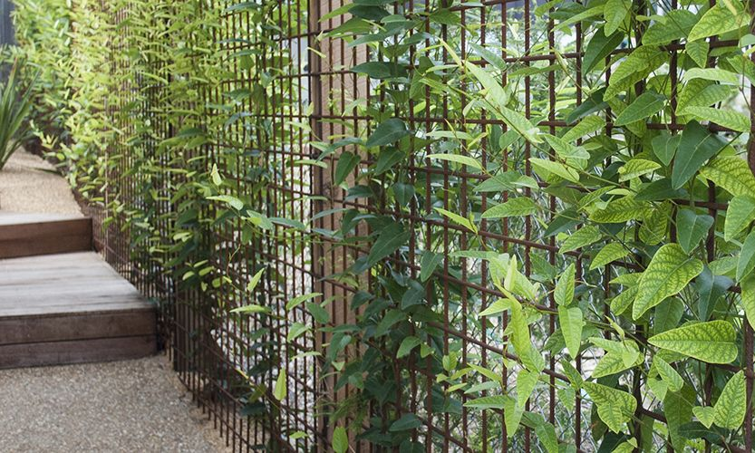 climbers Rised beds Pinterest Trellis, Garden and Fence