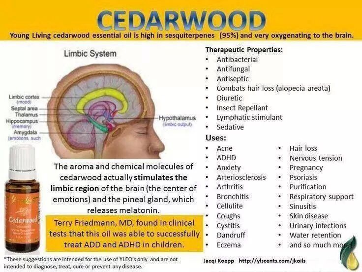 Cedarwood EO