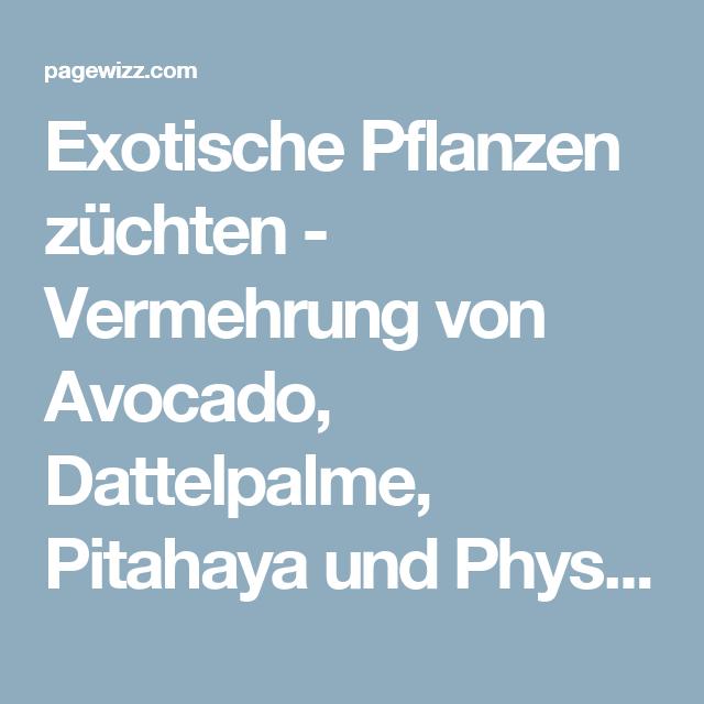 Exotische Pflanzen Züchten   Vermehrung Von Avocado, Dattelpalme, Pitahaya  Und Physalis