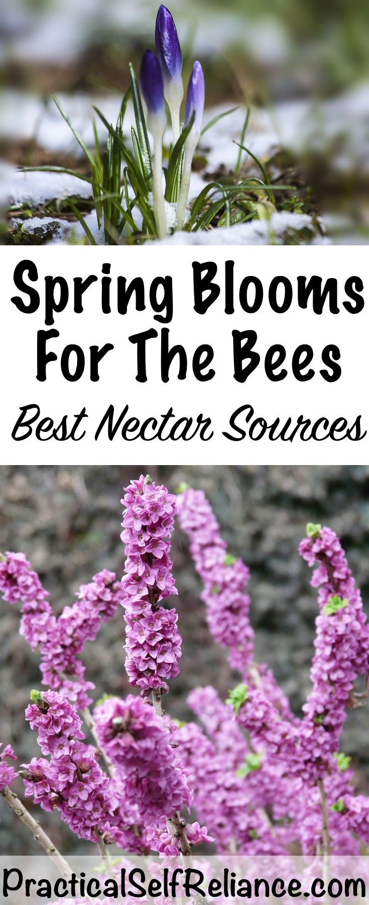 Early Spring Flowers For The Bees Spring Nectar Sources Flowers