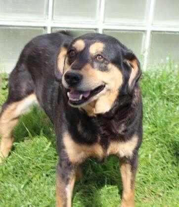 Labbe dog for Adoption in Williston, VT. ADN-487308 on ...