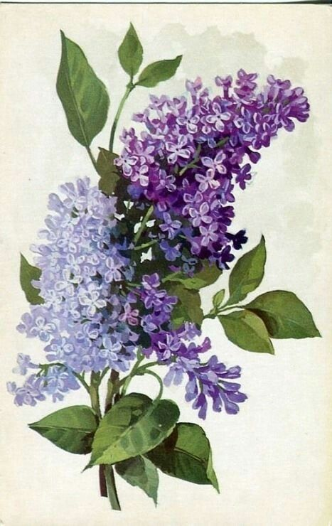 This Pic Reminded Me To Put Little Flowers Like Lilacs Or Forget Me Nots And Little Leaves In Organza Skirts Lilac Painting Flower Art Watercolor Flowers