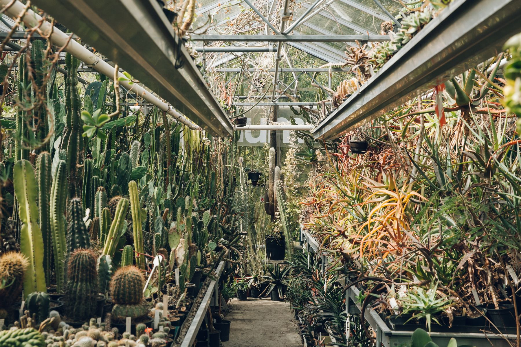 Botanische Tuin Amsterdam : Botanische tuin zuidas u amsterdam greens cactus
