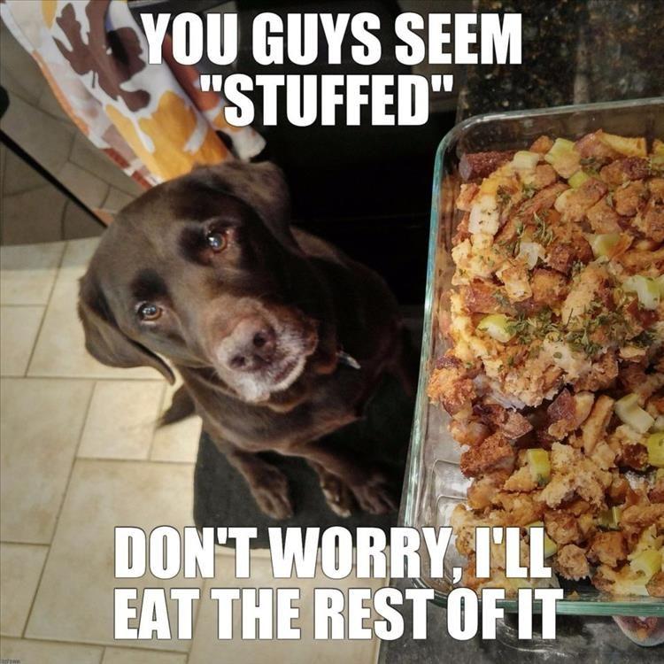 Funny Thanksgiving Meme Dump 35 Pics Funny Thanksgiving Memes Funny Dog Memes Dogs