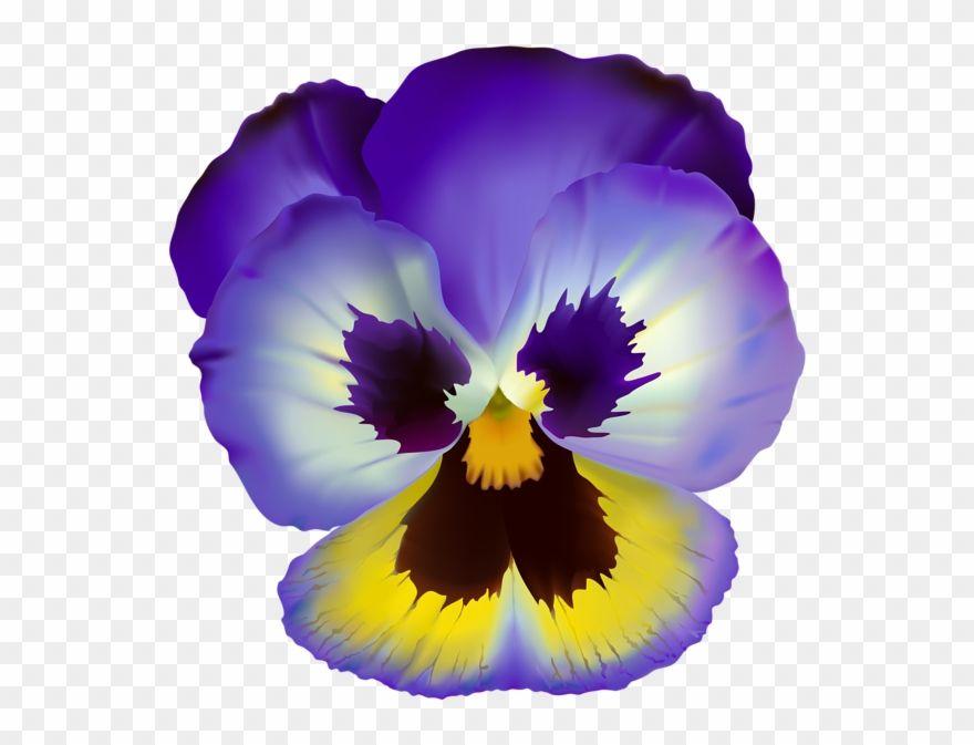 Violet Flower Transparent Clip Art Pansy Flower Clear Background Pansies Flowers Violet Flower Pansies