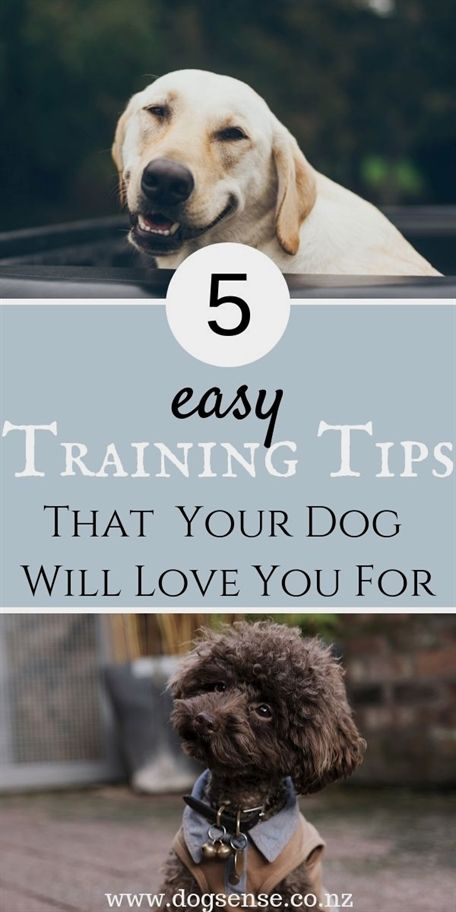 Dog Training Accessories Dog Training To Attack Dog Training