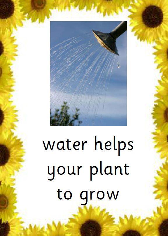 The Sunflower Pdf