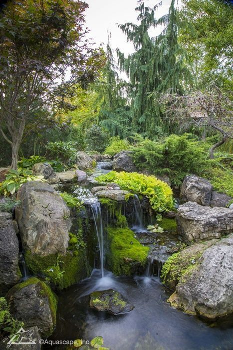 Inspiration from Our Lead Designer's Backyard Pond ...
