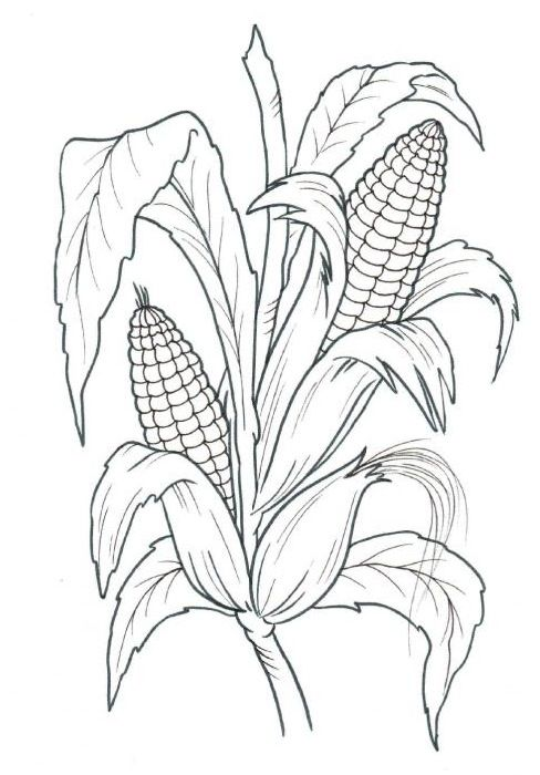 Maisfeld Google Suche Farm Animal Coloring Pages Fall Coloring Pages Corn Drawing