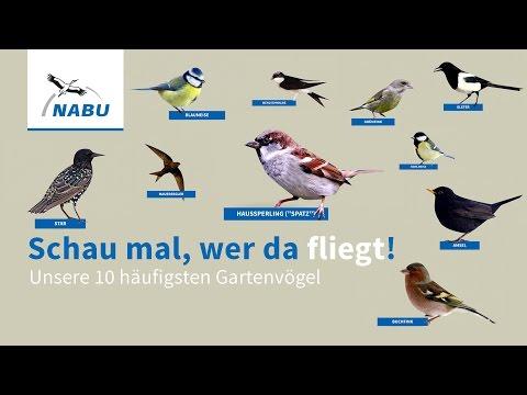 2 Top 10 Garten Vogel So Konnt Ihr Sie Erkennen Youtube Vogel Im Garten Einheimische Vogel Vogel Erkennen