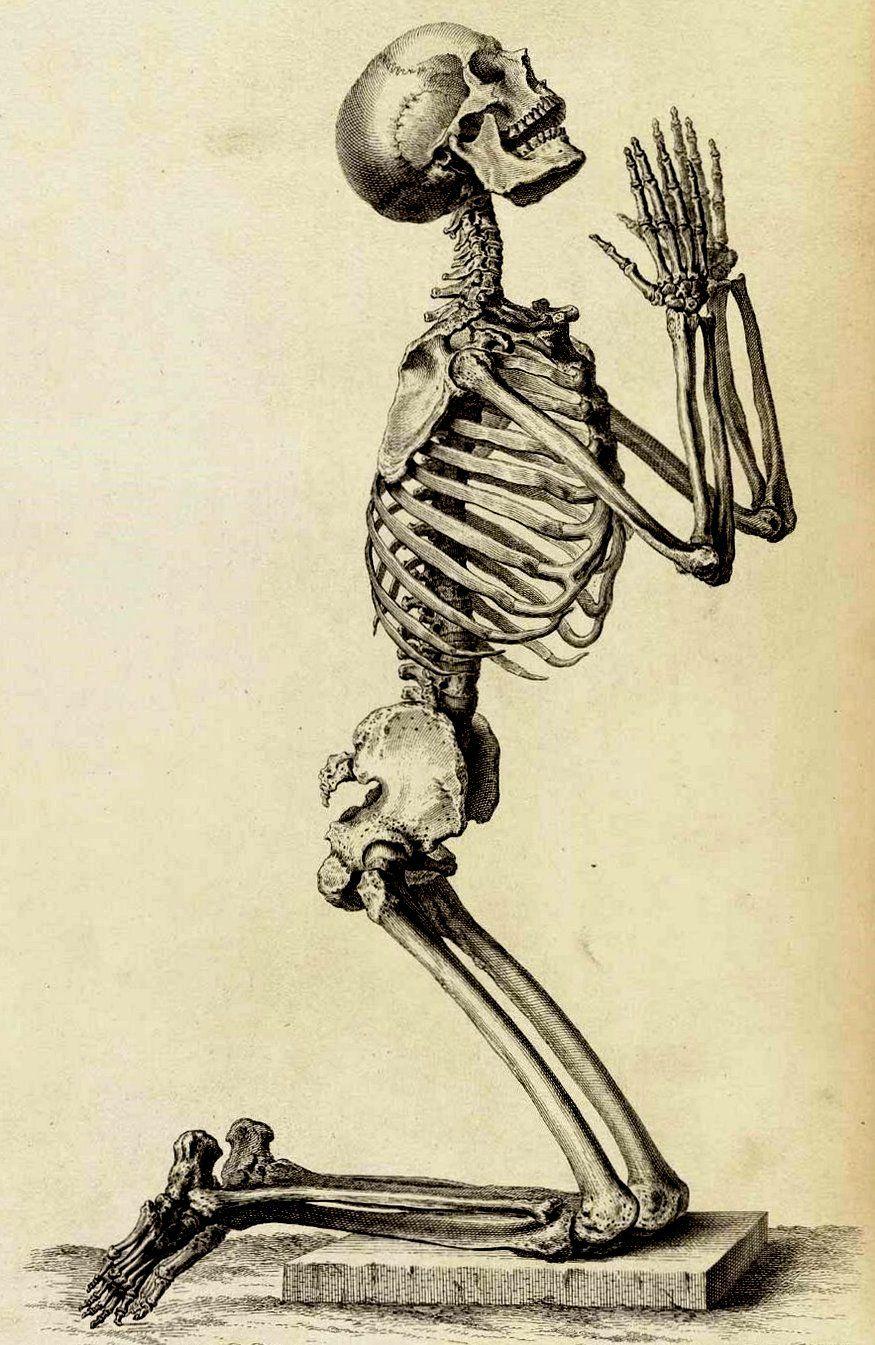 426a2ee04 Pin by Lara Greene - Vaught .... (aka. Lara Corsets) on Halloween Ideas in  2019 | Skeleton drawings, Anatomy art, Anatomy drawing