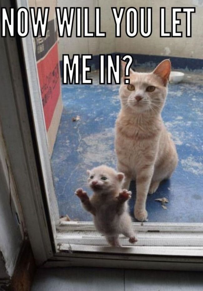 The 51 Best Funny Cat Pictures Of All Time Funnycats Funnycat Funny Cat Pictures Baby Animals Funny Funny Animals