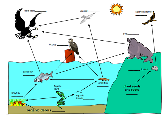 Heres A Nice Example Of A Food Web Animal Food Chains