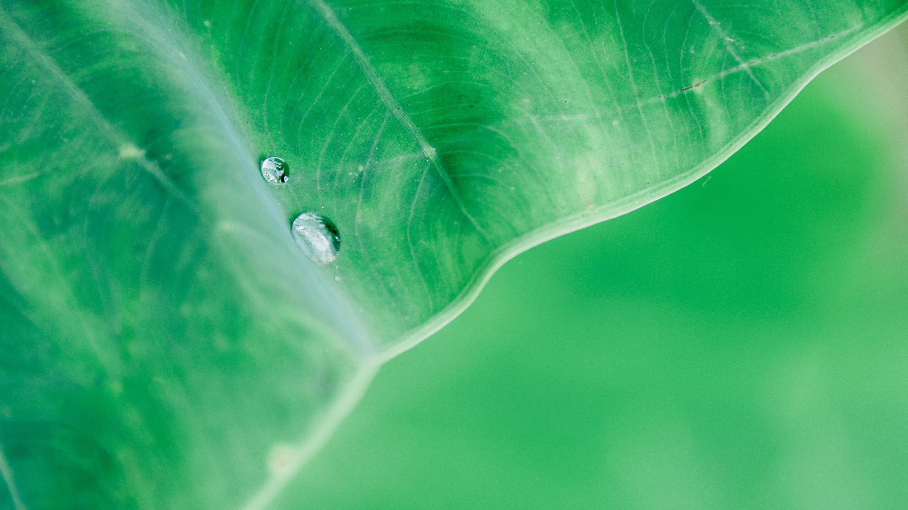 Water Drop On Leaf Macro 4k Wallpaper Https Hdwallpapersmafia Com Water Drop On Leaf Macro 4 Macro Photography Water Drop On Leaf Photography Backdrop Stand